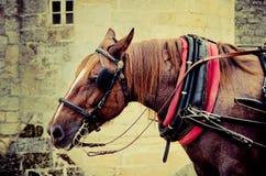 Focinho do cavalo Fotografia de Stock