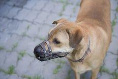 Focinho do desgaste do cão Imagem de Stock