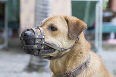 Focinho do desgaste do cão Fotografia de Stock Royalty Free