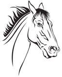 Focinho dos cavalos Fotografia de Stock Royalty Free
