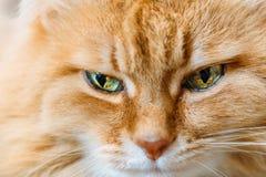 Focinho vermelho triste com olhos bonitos, fim do gato acima Fotografia de Stock Royalty Free