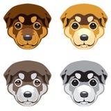 Focinhos de Puppy no fundo branco Fotografia de Stock