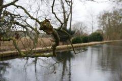 Foco agudo en la rama desnuda sobre un río - árbol, musgo y liquen del invierno imagen de archivo