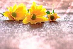 Foco ascendente y selectivo del cierre en el flawer amarillo de chrys hermosos Imagen de archivo