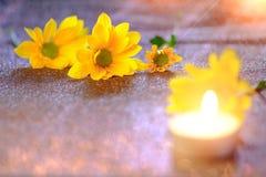 Foco ascendente y selectivo del cierre en el flawer amarillo de chrys hermosos Fotos de archivo