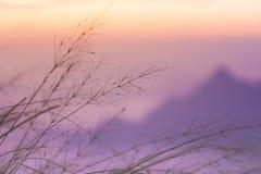 Foco borroso de la montaña violeta con la hierba móvil Foto de archivo