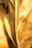 Foco borroso macro secado amarillo de la licencia Imagen de archivo