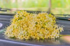 Foco borroso y suave suave de los fragrans de Fagraea, Loganiaceae, flor, en la zona delantera el coche con la luz natural imagen de archivo libre de regalías