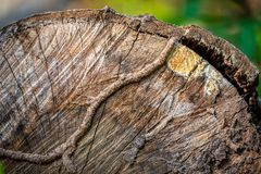 Foco cercano en superficie cortada del árbol imagen de archivo