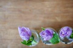 Foco criativo do uso de três tulipas violetas fotos de stock