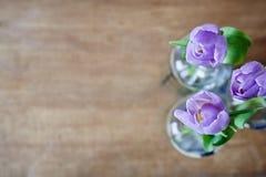 Foco criativo do uso de três tulipas violetas imagens de stock