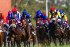 Foco da ação do close-up dos jóqueis da corrida de cavalos Fotografia de Stock Royalty Free