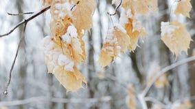 Foco da cremalheira nas folhas no inverno video estoque