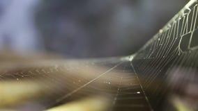 Foco da cremalheira da Web de aranha vídeos de arquivo