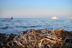 Foco da opinião de oceano na alga Foto de Stock Royalty Free