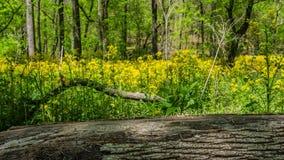 Foco da tração do lapso de tempo do log ao campo de flor que floresce no início do verão vídeos de arquivo