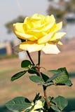 Foco de la imagen de la licencia de la planta de la vida de la naturaleza de la creatividad de la flor Imagen de archivo libre de regalías