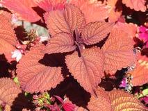 Foco em flores Imagem de Stock Royalty Free
