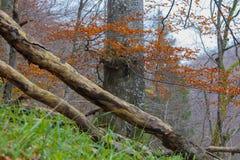 Foco en árbol fotografía de archivo