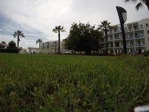 Foco en hierba verde Fotografía de archivo