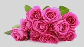Foco en rosas rosadas como regalo almacen de video