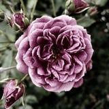 Foco floral Imágenes de archivo libres de regalías