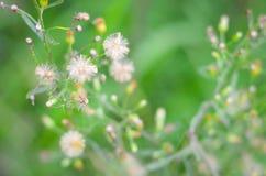 Foco macio da flor da grama Imagens de Stock Royalty Free