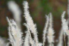 Foco macio da grama Fotos de Stock