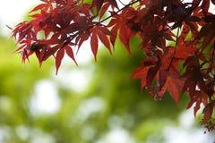 Foco muy bajo de las hojas de otoño en bokeh verde Imagen de archivo