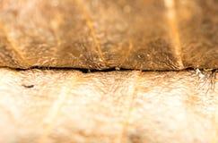 Foco obscuro macro secado amarelo da licença Fotografia de Stock
