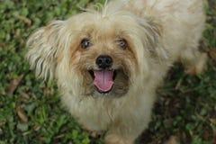Foco seleccionado de un perro adorable Foto de archivo libre de regalías