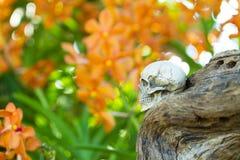 Foco selectivo en el cráneo humano en tocón Fotos de archivo