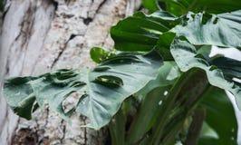 Foco selectivo en las hojas verdes con los agujeros foto de archivo