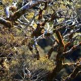 Foco selectivo en los árboles Foto de archivo