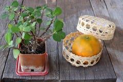 Foco selectivo en naranja en una cesta con la corona de espinas o de la espina de Cristo en viejo fondo del tablero de madera Año Foto de archivo libre de regalías