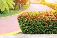 Foco selecto, flor del punto en parque verde con efecto de la llamarada de la lente Fotografía de archivo libre de regalías
