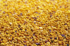Foco seletivo da grão do pólen Fotografia de Stock