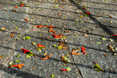 Foco seletivo de flores alaranjadas da queda na terra Foto de Stock Royalty Free