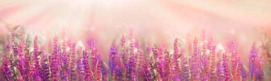 Foco seletivo e macio em flores roxas no prado fotografia de stock