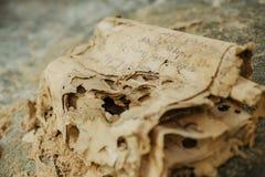 Foco seletivo em originais velhos, em letras de séculos passados ou nos manuscritos de papel em língua desconhecida fotos de stock royalty free