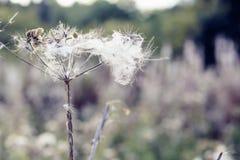 Foco seletivo, plantas macias do cardo em Hampstead Heath de Londres imagens de stock royalty free