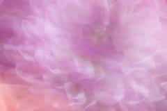 Foco suave Daisy Background Fotografía de archivo