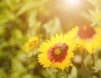 Foco suave, flores hermosas y abeja Imagen de archivo libre de regalías