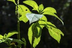 Foco verde da epiderme da folha no primeiro plano com fundo borrado imagem de stock