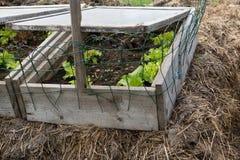 Focolaio naturale con insalata Fotografia Stock