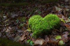 Focolare della natura in foresta Fotografie Stock