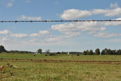 Focus on barb wire fence Stock Image