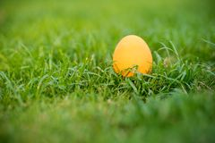 Focus Colorful An Easter Egg On The Grass Field. Eater Egg On The Garden. Sign Of Easter`s Day Festival. Vivid Egg On Green Field.