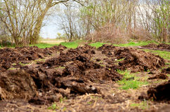 Focus in on the freshly planted rows. Planting potatoes in a field. Focus in on the freshly planted rows stock photography