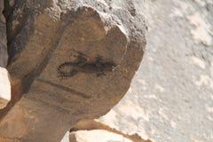 Lizard hold onto a Rock Stock Photos